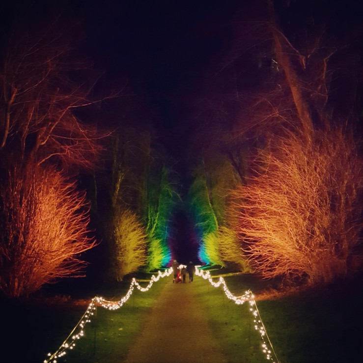 Christmas lights in Dorset. Colourful illuminated trees in December. Rainbow colours. Christmas illumination in a country garden, England.
