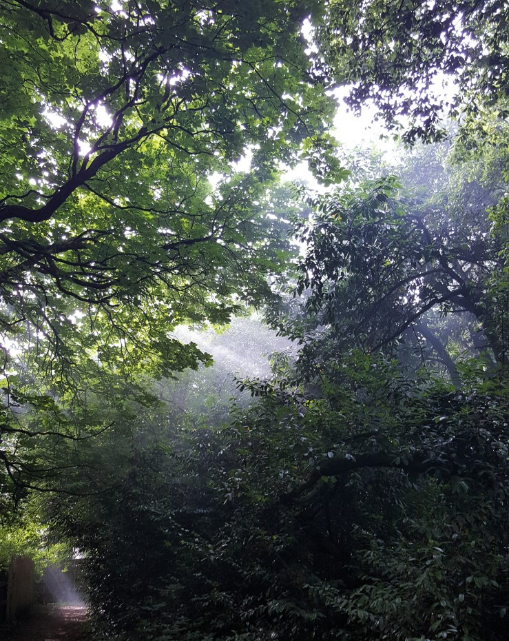 Smoky light beams in a woodland, Dorset.